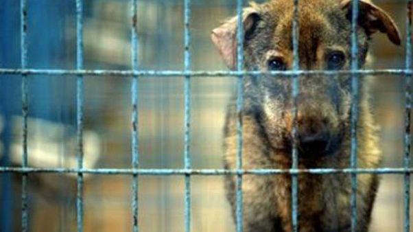 İngiltere'de yavru kedi ve köpeklerin pet shoplarda satışı yasaklanıyor