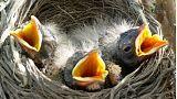 Birds 'starve' in Europe's extreme summer heat