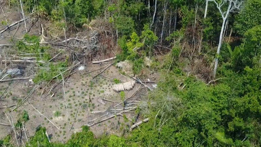 Amazon Ormanları'nda yaşayan kabileye ait ilk görüntüler ortaya çıktı