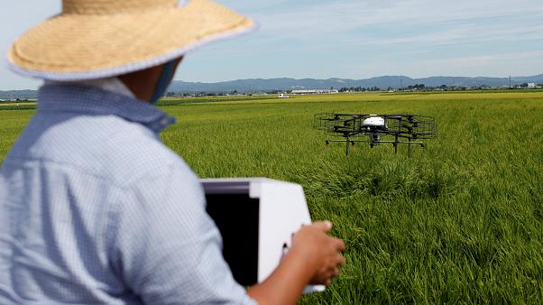 Yaşlanan Japon çiftçileri 'drone tarımı'na hazırlanıyor