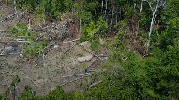 Revelan las primeras imágenes de una tribu aislada en la Amazonía