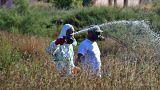 Στους 11 οι νεκροί από τον ιό του Δυτικού Νείλου