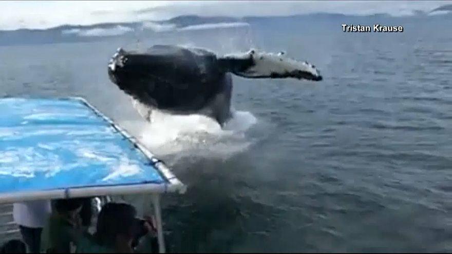 """شاهد: حوت """"يلاعب"""" مجموعة من السياح على مركب في ألاسكا"""