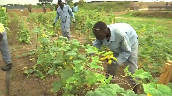Les cultures de la paix au Soudan du sud