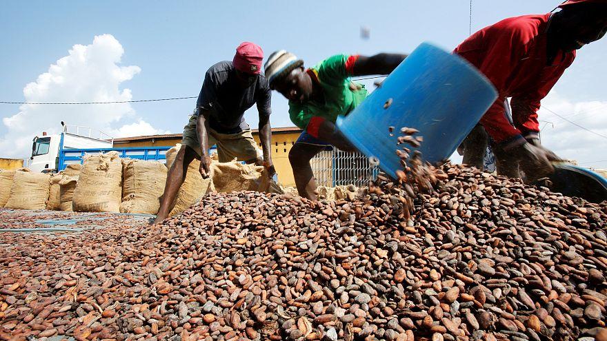 Fildişi Sahili ve Gana 'kahverengi altın'ı kurtarmak için iş birliği yapacak