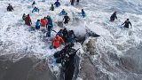 Argentina, salvate le orche assassine