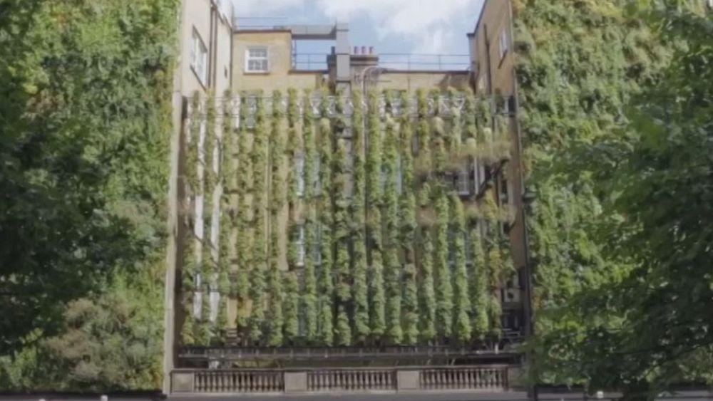 Watch: Hotel in London goes green