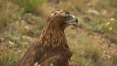 Falconry: A very ancient tradition in Kazakhstan