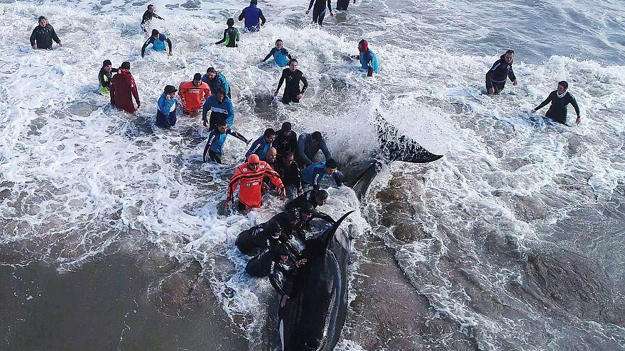 Αργεντινή: Επιχείρηση διάσωσης φαλαινών δολοφόνων
