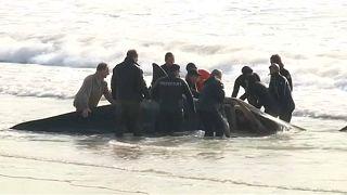 Argentinos unem-se no salvamento de orcas em Mar del Ajo