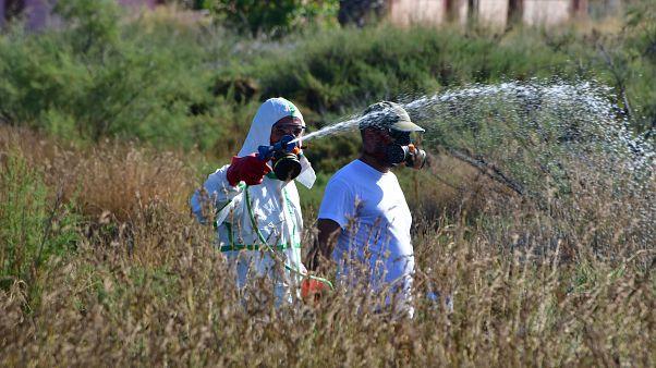 Κ.Μακεδονία: Σαράντα τα κρούσματα του ιού του Δυτικού Νείλου