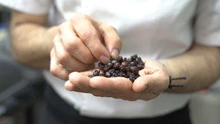 Ameisen-Kaviar: Insekten-Imbiss für zwischendurch