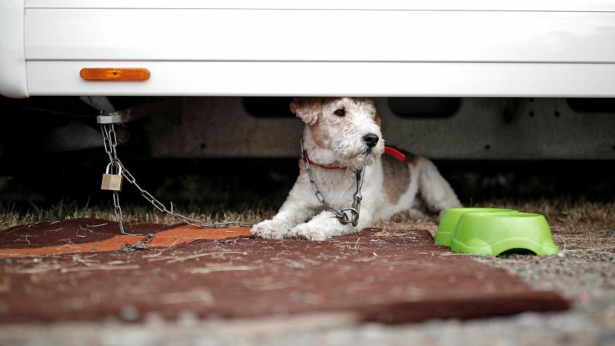 Electric shock dog collars to be banned in England