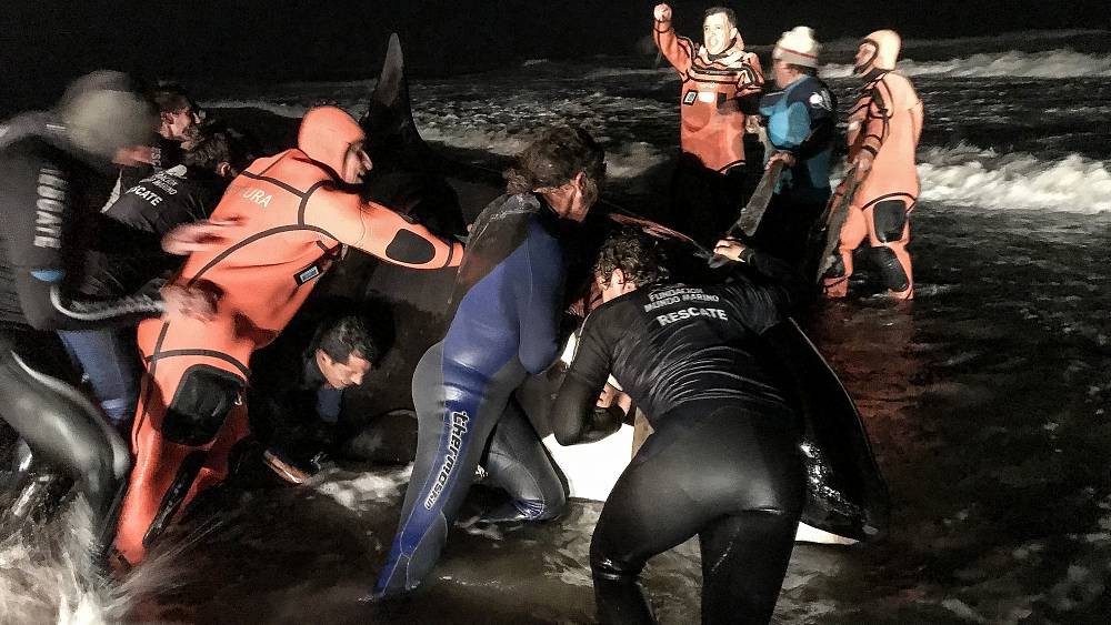 Watch: Whale washed up on beach returned to the ocean