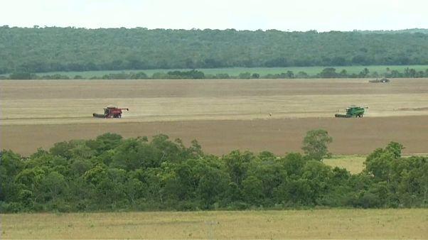 Recorde de produção de soja ameaça savana tropical do Cerrado
