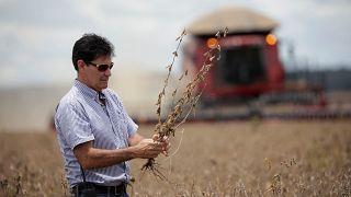 Au Brésil, le soja chasse les forêts