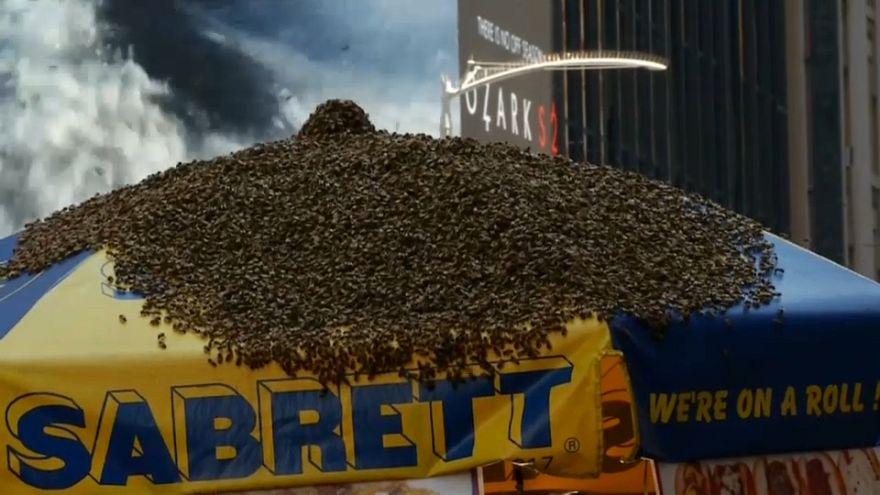 ABD: Times Meydanı'na arı baskını