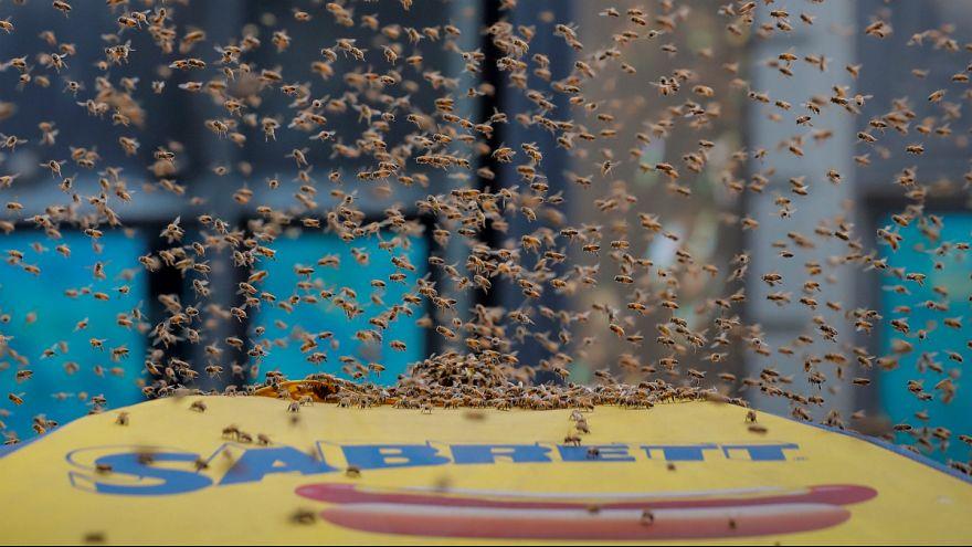 هجوم زنبورها به میدان تایمز نیویورک