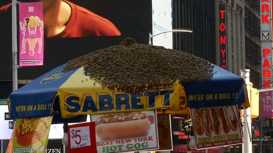 Watch: Thousands of bees descend on New York hotdog stand
