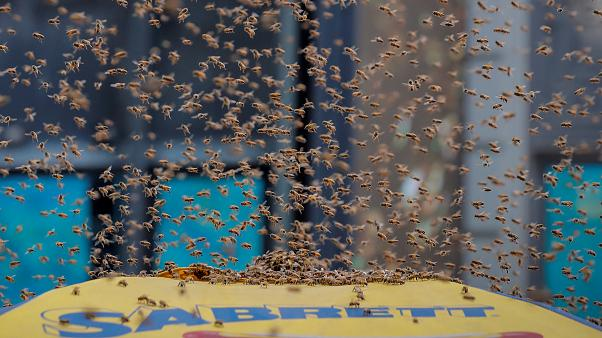 Watch: Thousands of bees swarm hot dog stand in New York