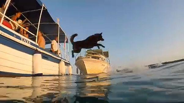 Cães e donos competem no Mar Adriático