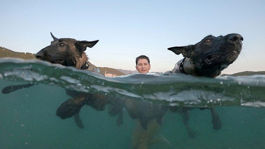 Watch: Canine beach race in Croatia