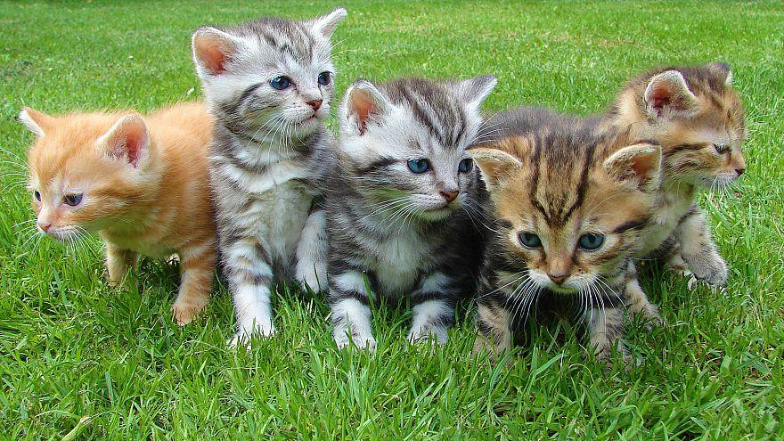 Aldeia neozelandesa quer banir gatos