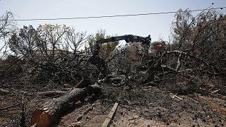 Στους 98 οι νεκροί από την πυρκαγιά στο Μάτι