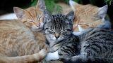 Szundikáló cicák Csehországban