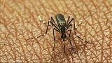 Febbre del Nilo: è record di contagi. In Italia 13esima vittima