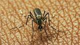 16 muertos en Grecia por el virus del Nilo occidental