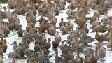 Mistério da biodiversidade nas mãos da Fundação Champalimaud