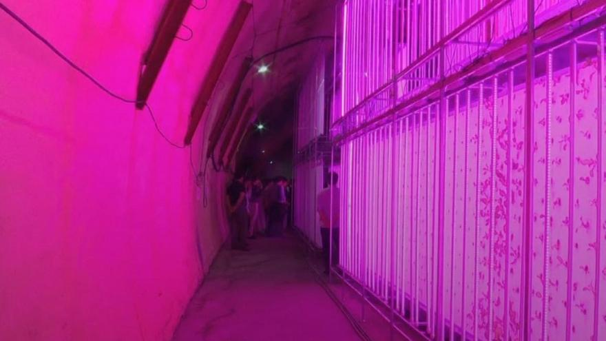 Watch: World's first smart farm in a tunnel