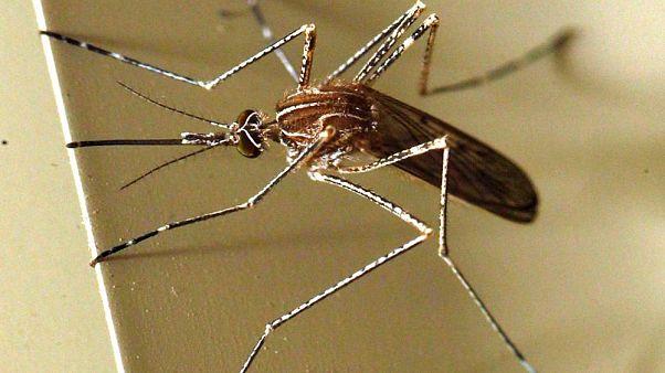 AB'de son 4 yılın en ölümcül salgını 'Batı Nil virüsü'