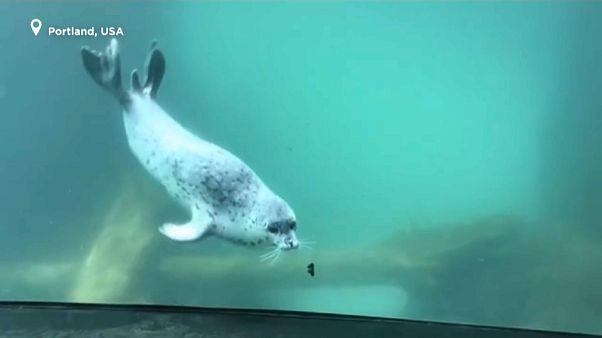 El especial encuentro entre una foca y una mariposa