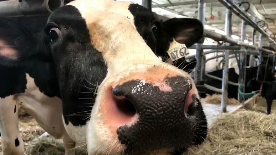 Es geht um die Milch: USA und Kanada ringen um NAFTA