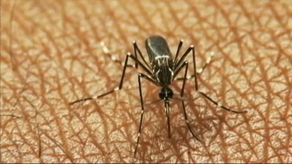 Alerta en Europa por la propagación del virus del Nilo occidental
