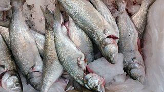 فيديو لأسماك بعيون بلاستيكية يدفع السلطات الكويتية إلى غلق متجر لبيع الأسماك