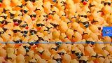 Cincinnati holds Rubber Duck charity race