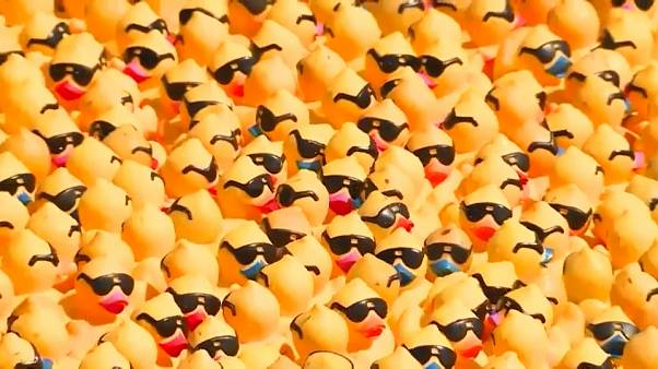 شاهد: آلاف البطات المطاطية تشارك في سباق خيري في أوهايو