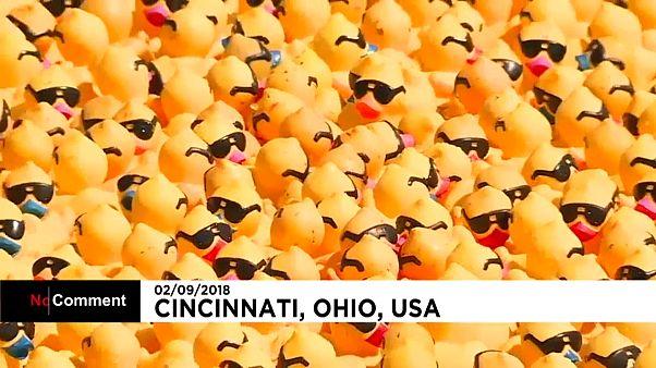 "A ""ducky"" Cincinnati tradition for a good cause"