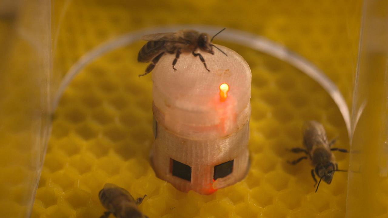 De minuscules robots européens communiquent avec les abeilles