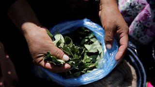 Bolivie : des milliers de manifestants défendent la culture de la coca