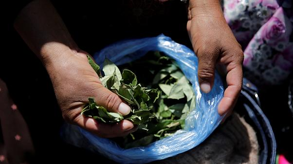 Coca growers protest Bolivian government