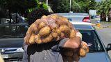 Νέο ρεκόρ Γκίνες για την πατάτα Νάξου
