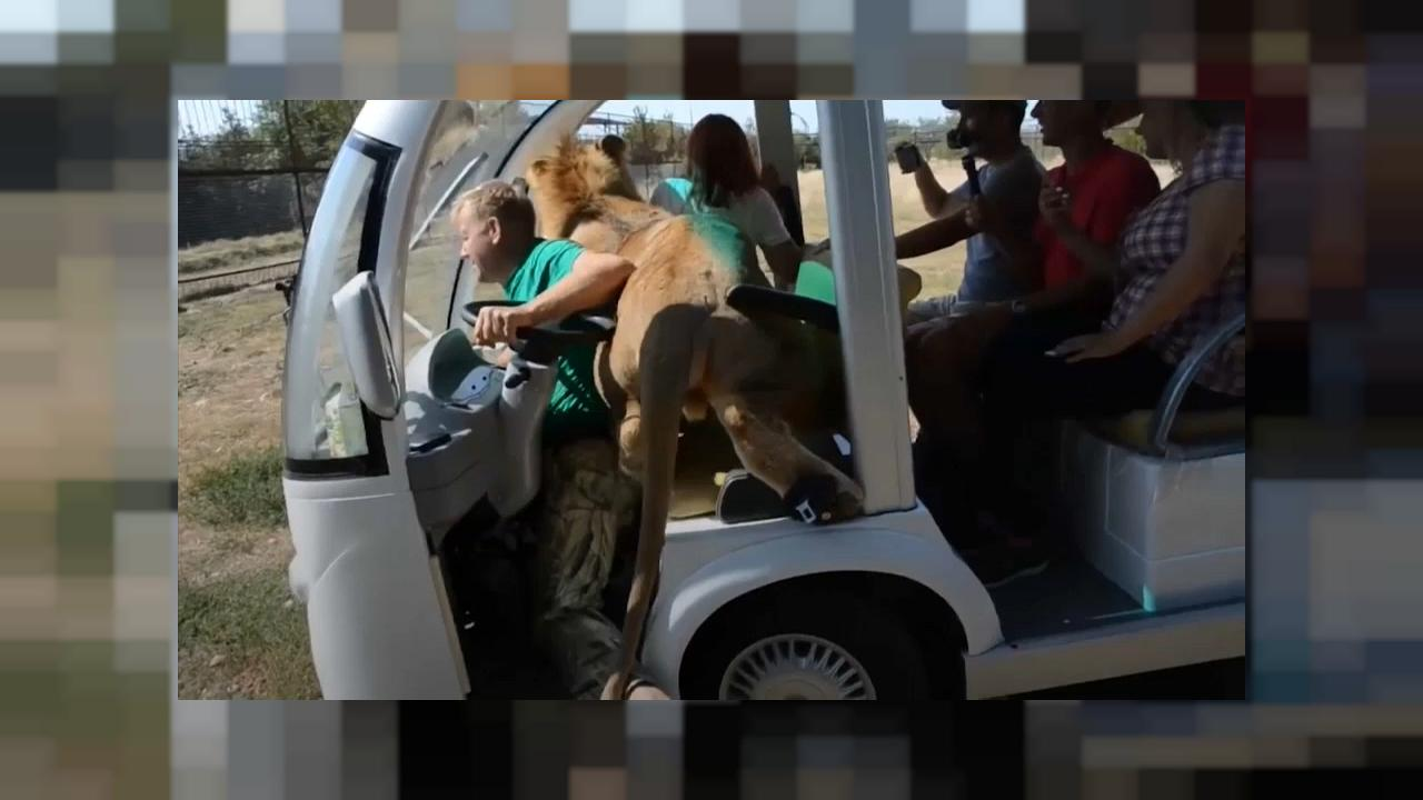 The Crimea zoo that lets you get up close and personal with lions