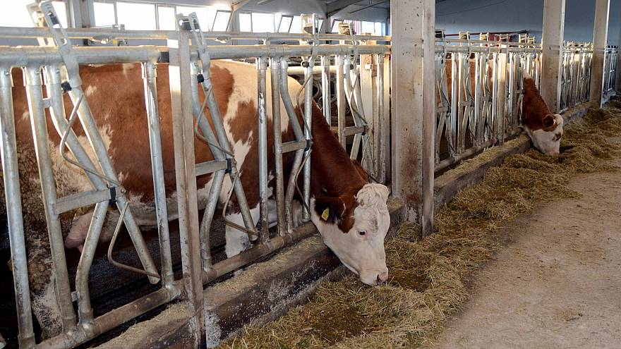 Türkiye'nin et sorunu: Hayvancılık neden bitti, Türkiye ette nasıl dışa bağımlı hale geldi?