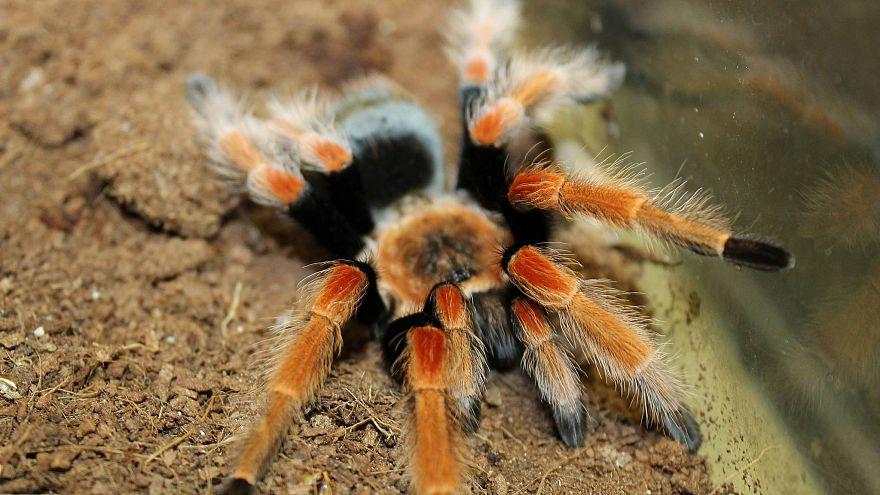 ABD'de ilginç müze soygunu: 7 bin canlı böcek çalındı