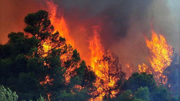 Yπό έλεγχο η φωτιά σε ένα από τα τελευταία παρθένα δάση της Ρόδου