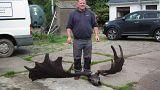 """""""Pescan"""" un gigantesco cráneo de un alce irlandés extinguido"""